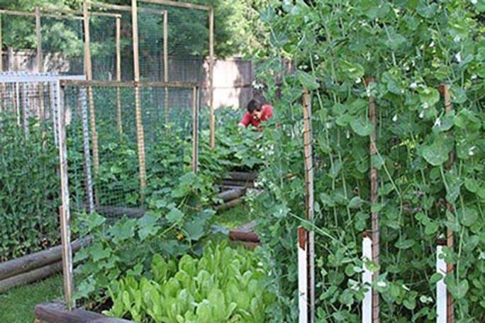 Bernards-garden.jpg