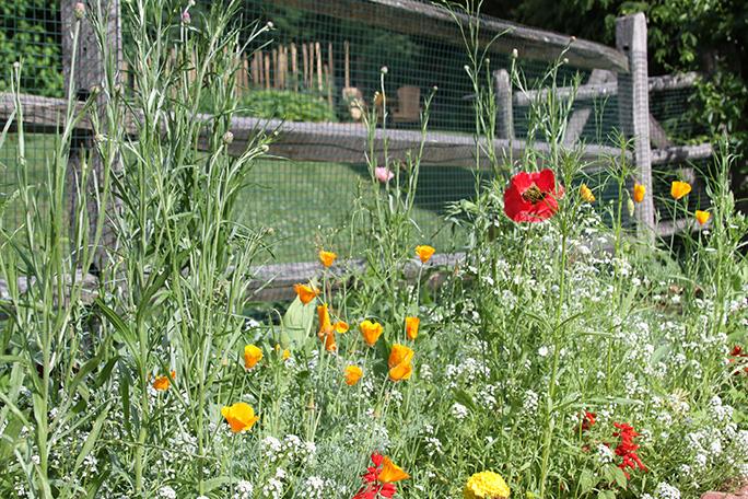 watch our garden grow 001.JPG