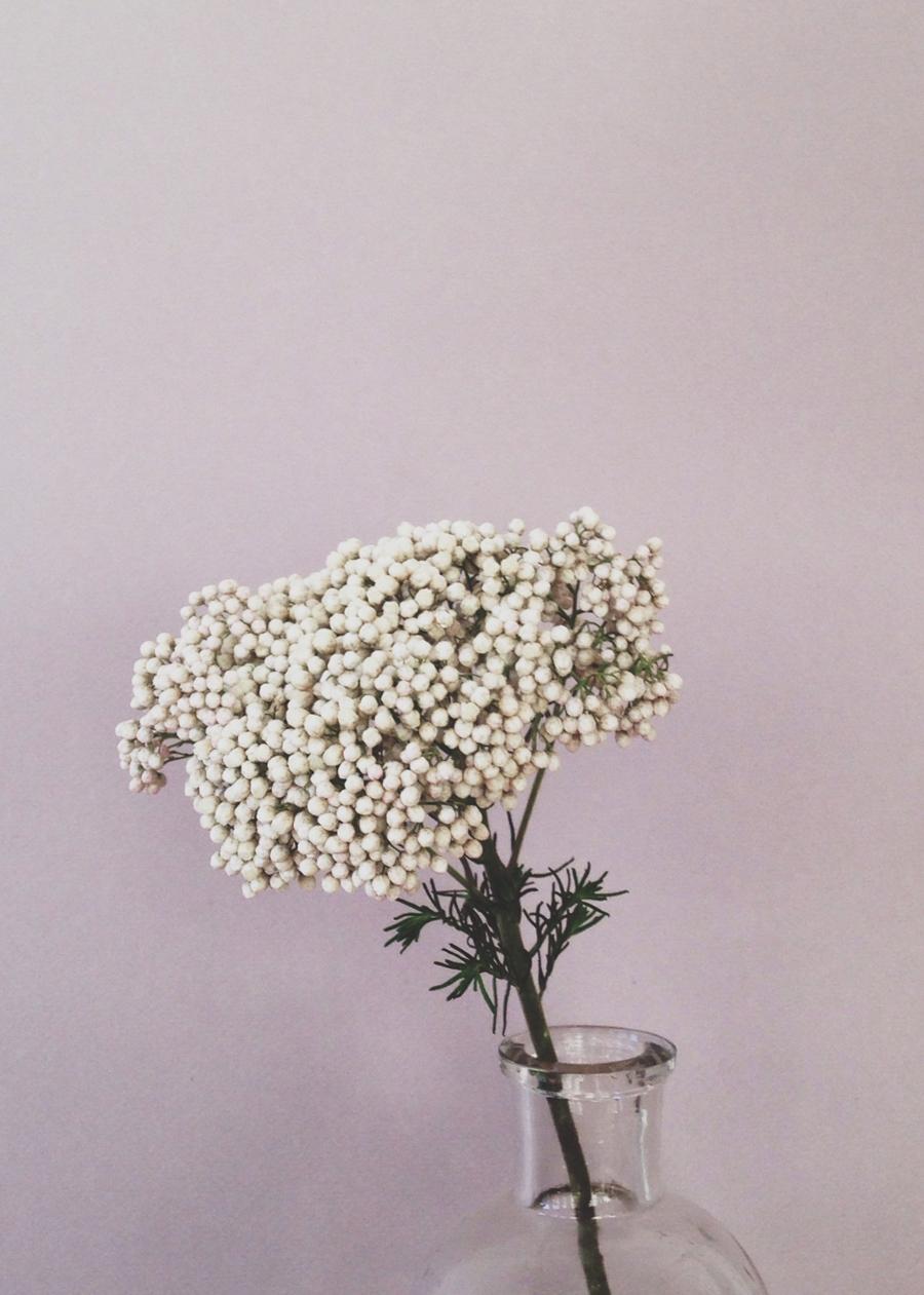 riceflower.jpg