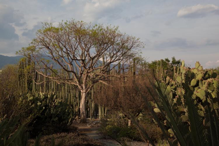 Oaxaca Blog Hor-4213.jpg