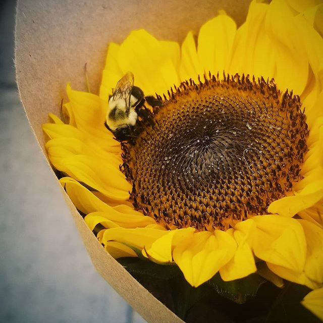 Enjoying the last days of summer #beehavior #sunflower #bywardmarket