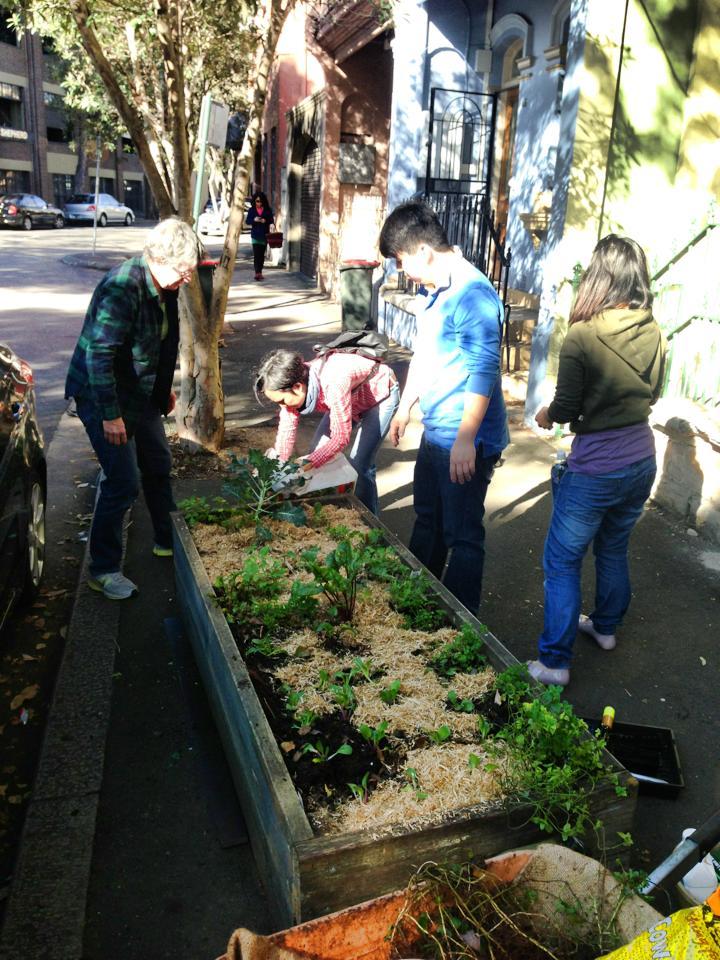 Sus chip Gardening.jpg