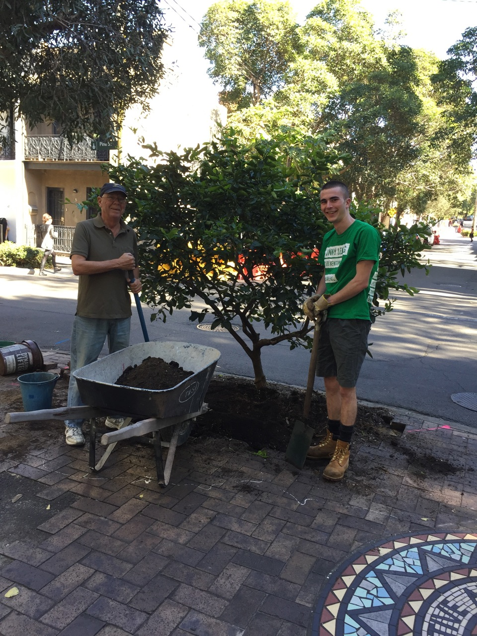 Warwick and Eamonn digging out the Tahitian Lime ready for transplanting.