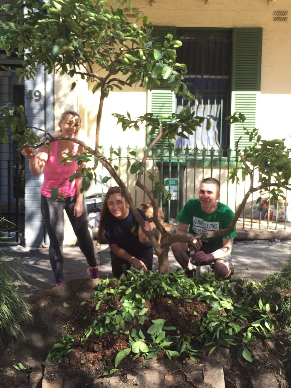 Bianca, Serena and Eamonn with the tree in its new place.  Fingers crossed the tree survives the trauma of the move
