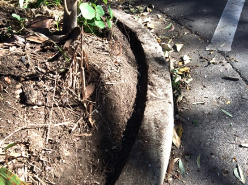 Trimmed soil form a shallow gutter that stops erosion and lost of water.