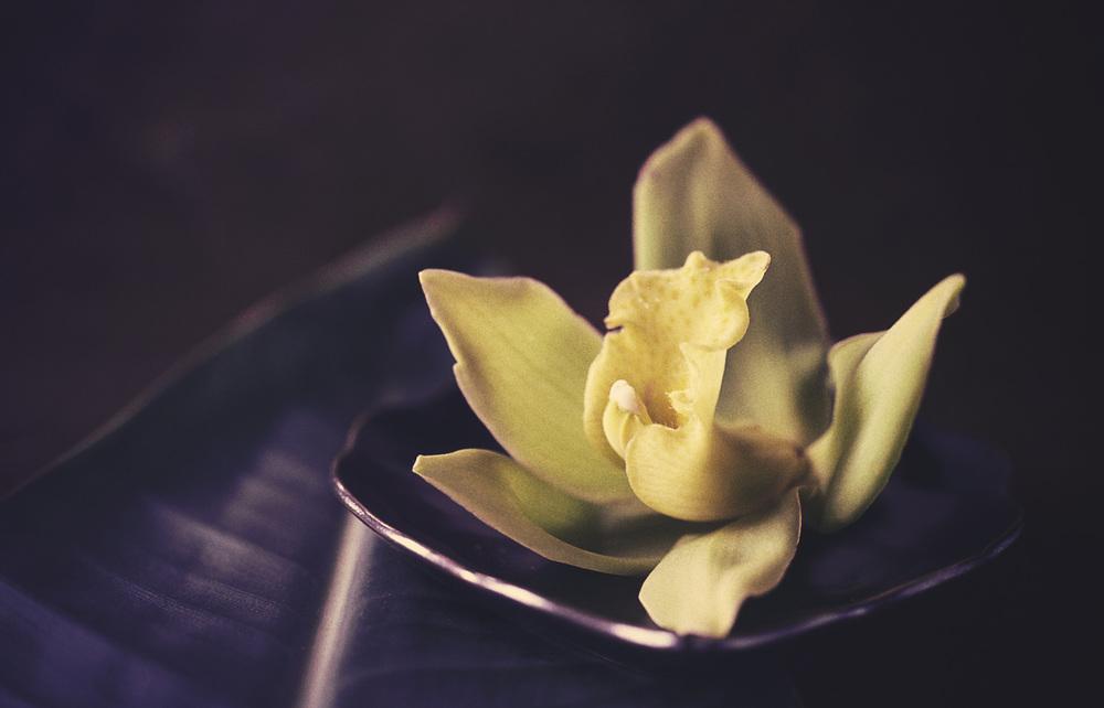 orchid.kodachrome.jpg