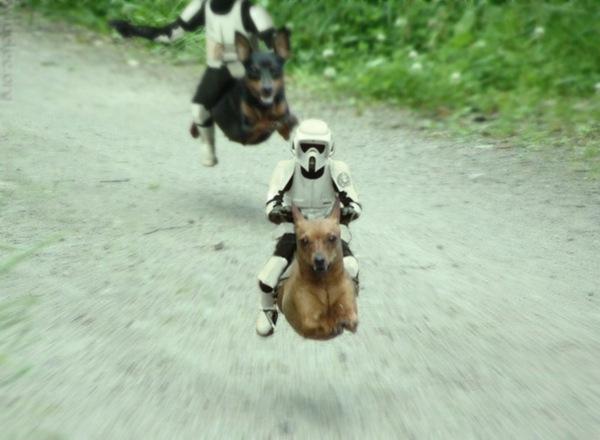 scoutsondogs