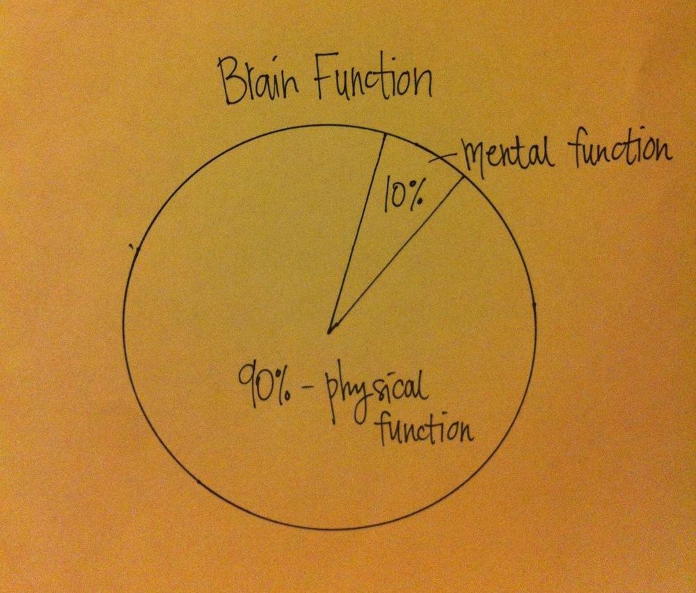 brain function.JPG