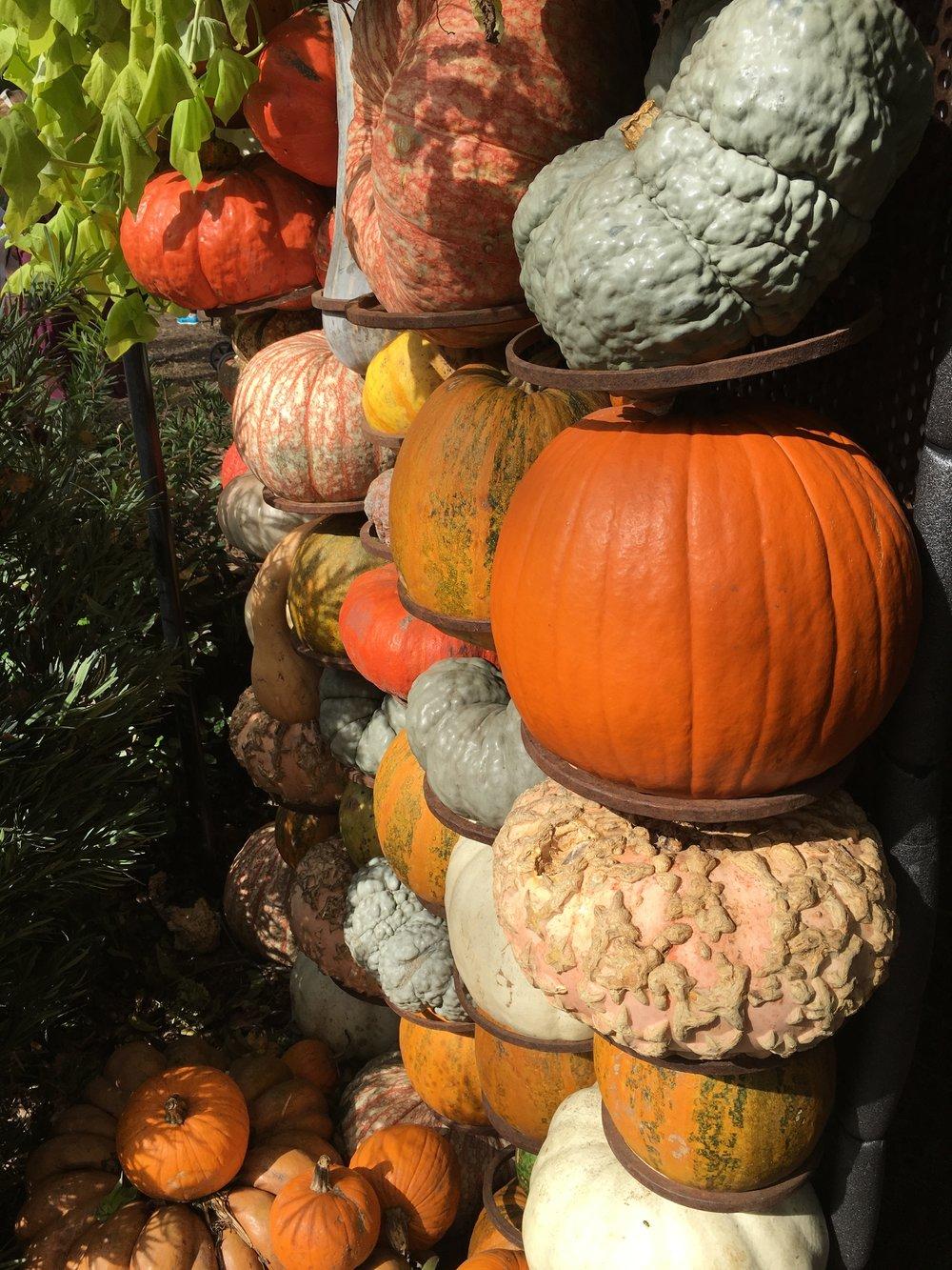 Gourd Art at Dallas Arboretum and Botanical Garden, TX