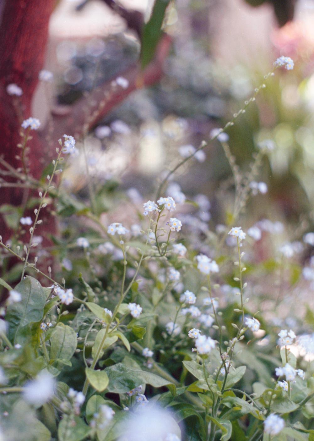 Longwood-Gardens_023.jpg