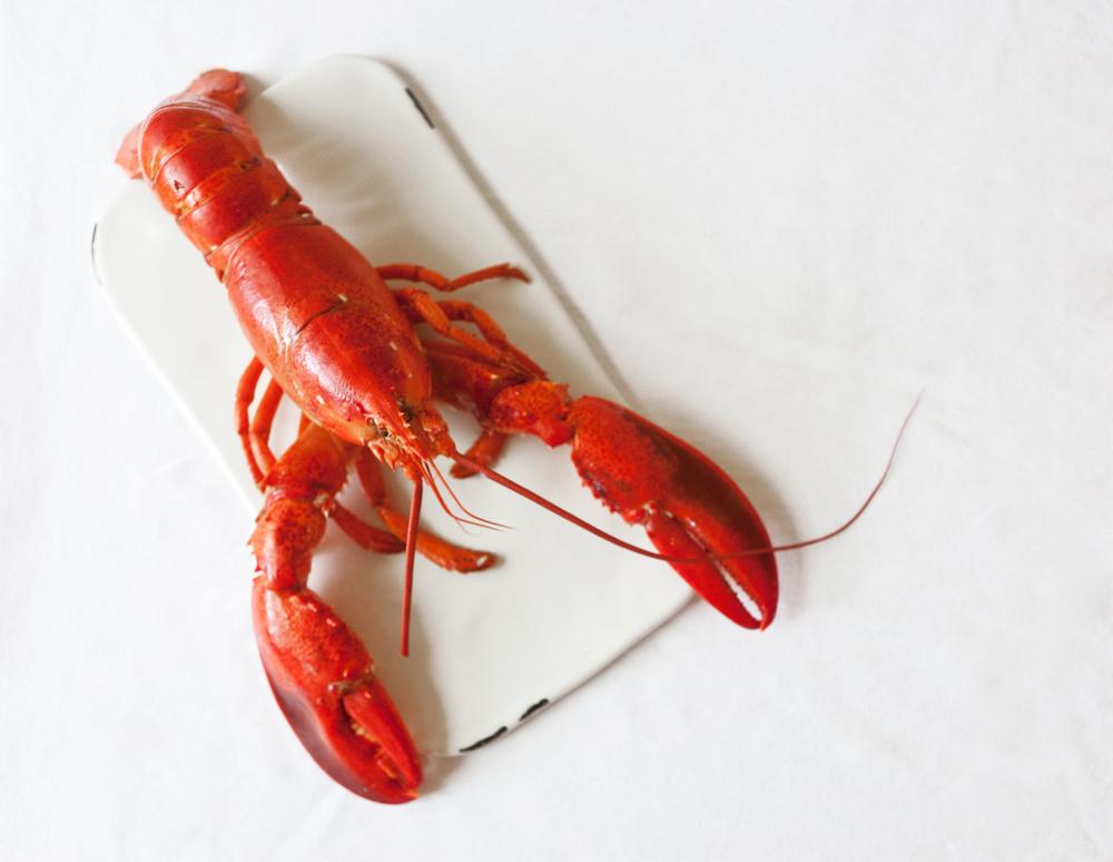 Lobster-Rolls-02.jpg