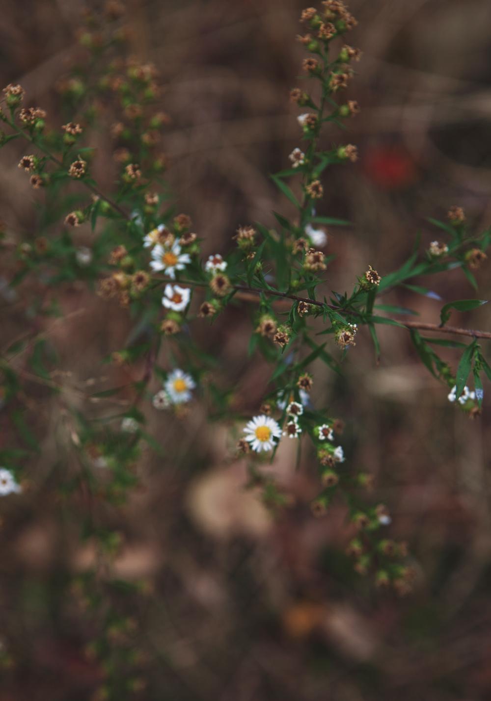Flowers_November_01.jpg