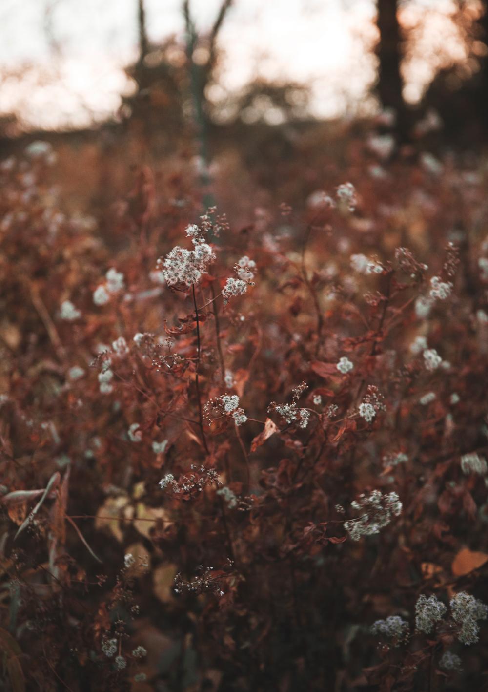 Red_November_02.jpg