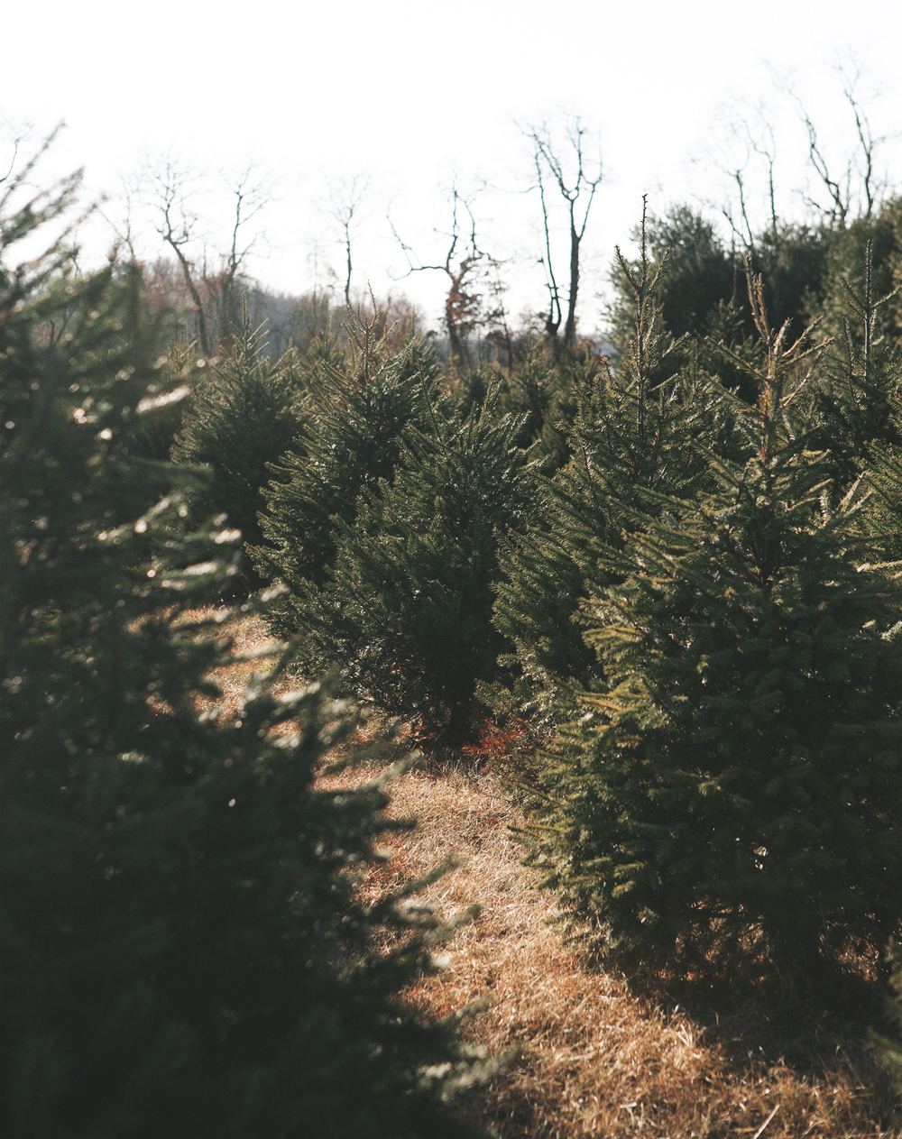 christmas-tree-hunting_12.jpg