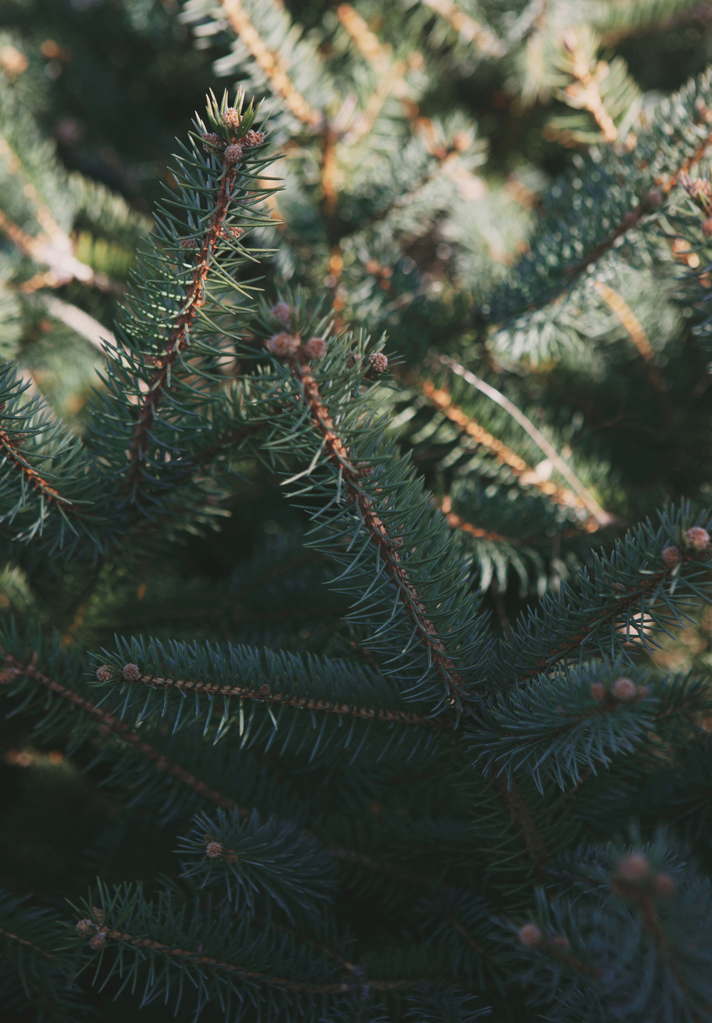 christmas-tree-hunting_08.jpg