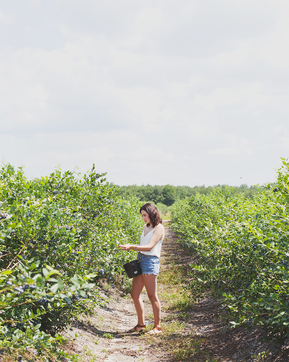 Blueberry-Picking_JG_0096.jpg