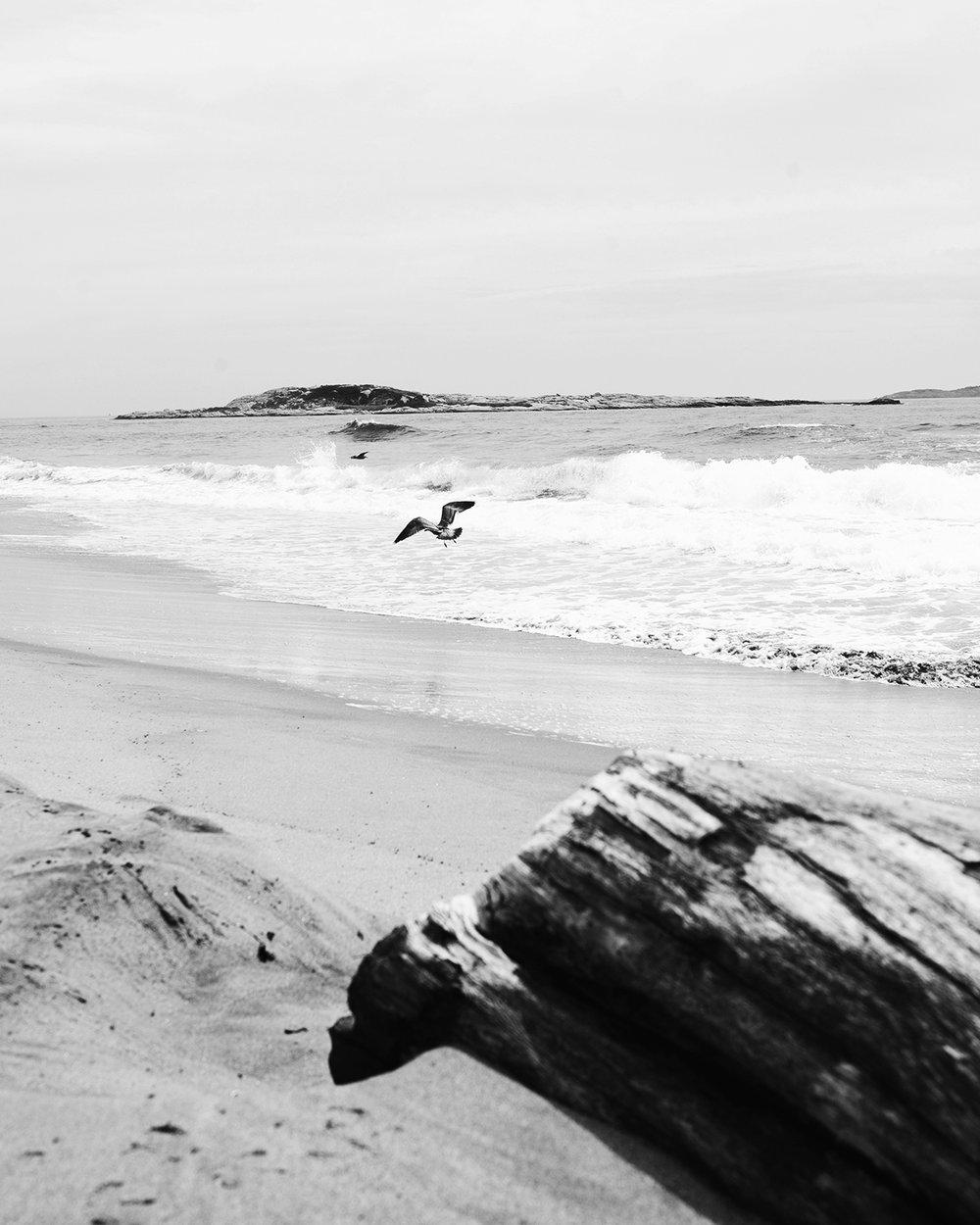 Maine_8x10.jpg