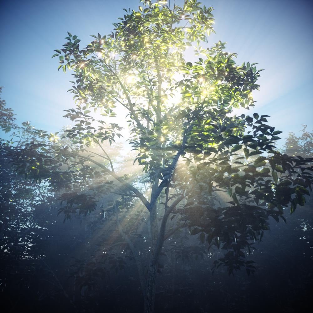 TreeFog_v1.png