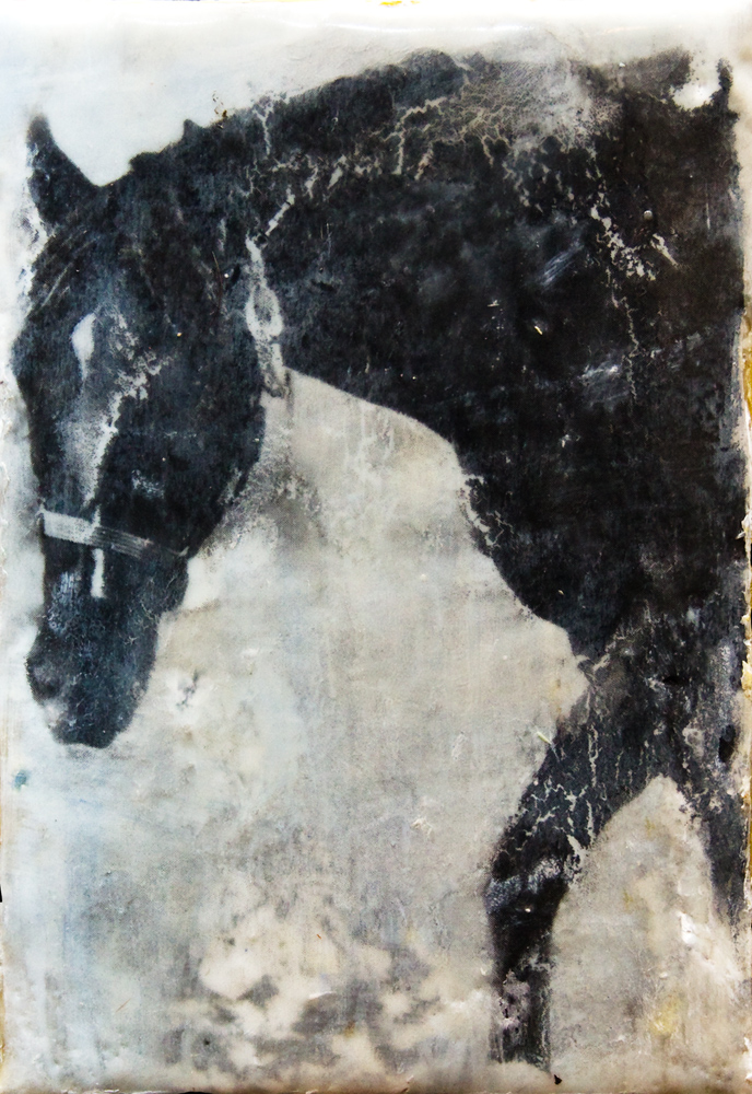 black-horse.jpg
