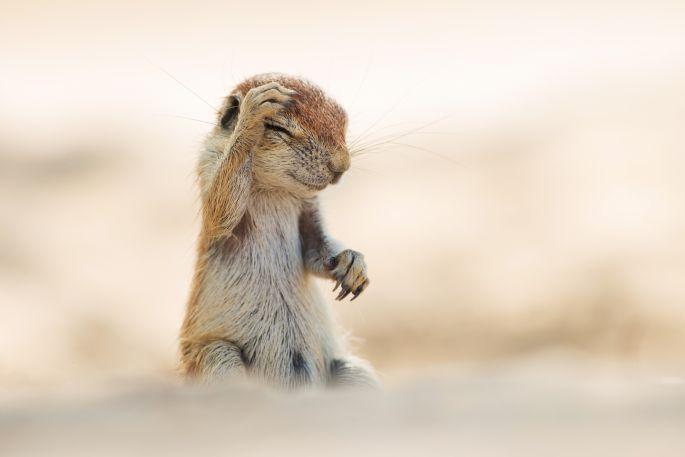 I wish I had taken this.. but I didn't [sigh] Credit: Yuzuru Masuda/Comedy Wildlife Photography Awards