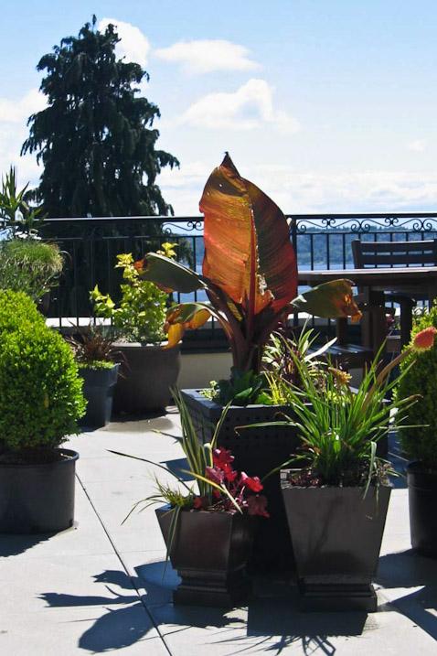 queen-anne-landscape-deck-exterior-seattle-paul-moon-design-architecture-2.jpg