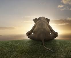 siddhasana elephant.jpg