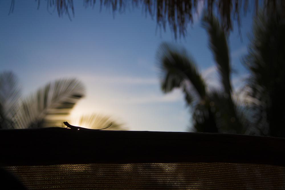 Lizard Silhouette.jpg