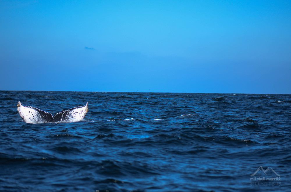 whale wave-2.jpg