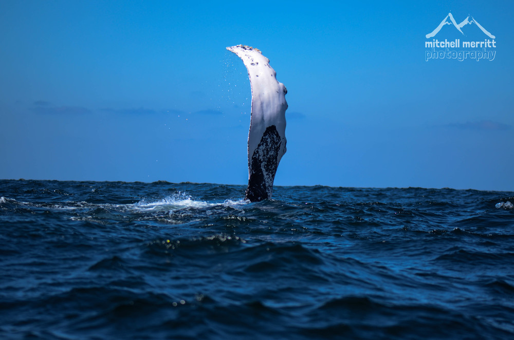 whale wave-1.jpg