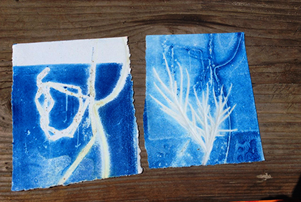 More prints of the day. They ended up looking a lot like cyanotypes. We were inspired by the blue of the sea I guess!