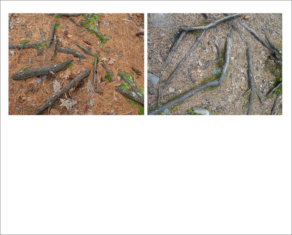 N_Haselbacher_Roots.jpg