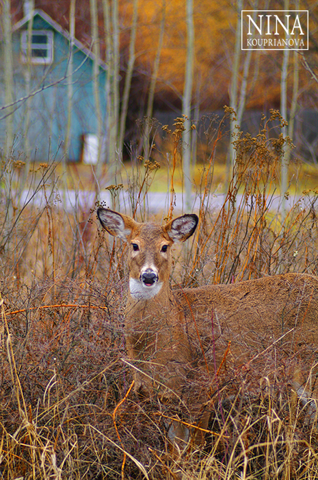 Camouflage (Northwestern U.S.)