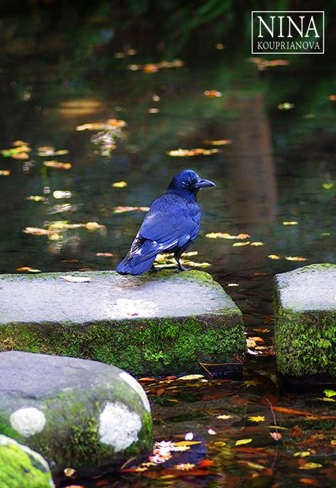 The Visitor (Kanazawa, Japan)