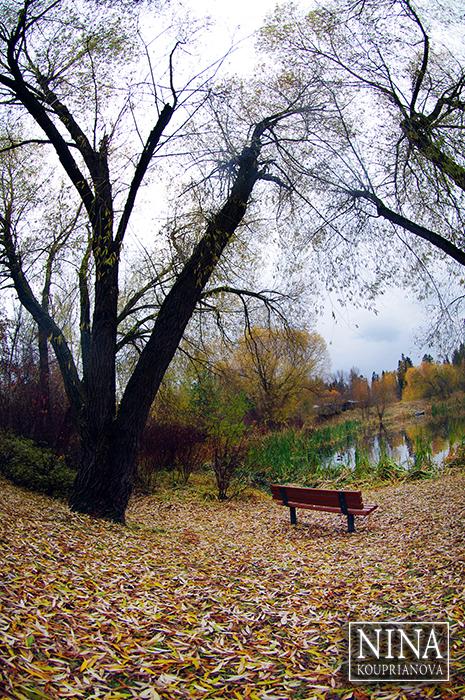 Autumn Solitude (Northwestern U.S.)