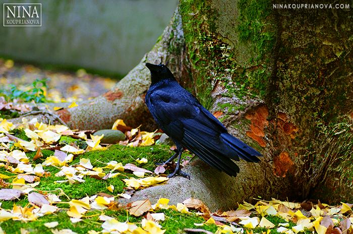 crow 2 700 px with logo.jpg