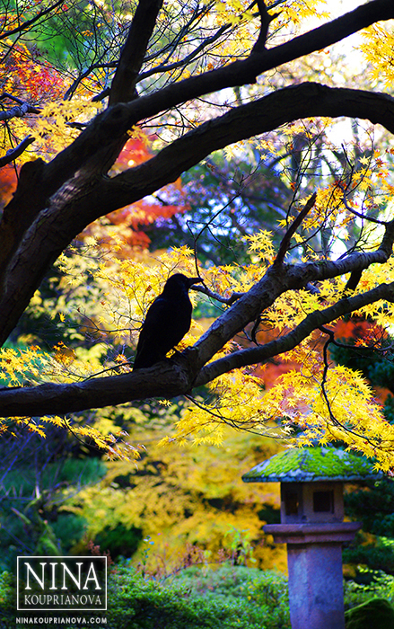 crow on tree cropped 700 px with logo.jpg