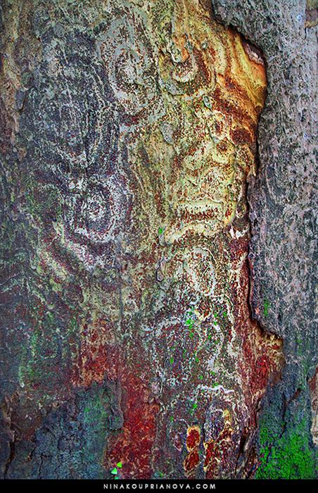 tree bark 700 px with url.jpg
