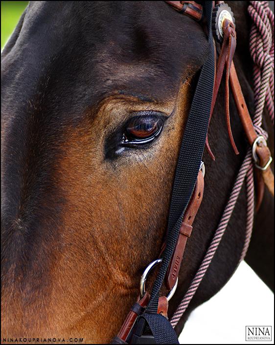 mule closeup 700 px.jpg