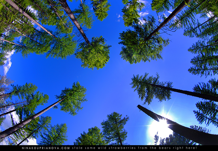 pnw tree sky 750 px.jpg