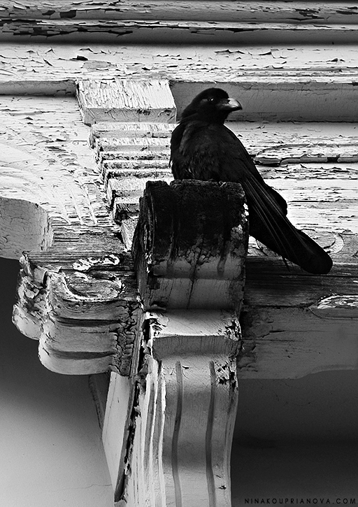 raven hakodate russian consular building vertical bw 725 px with url.jpg