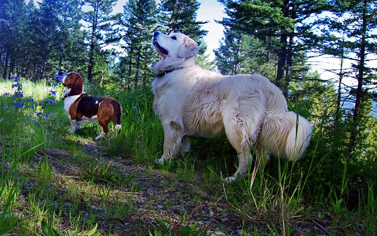 dogs on a hike 750 px.jpg