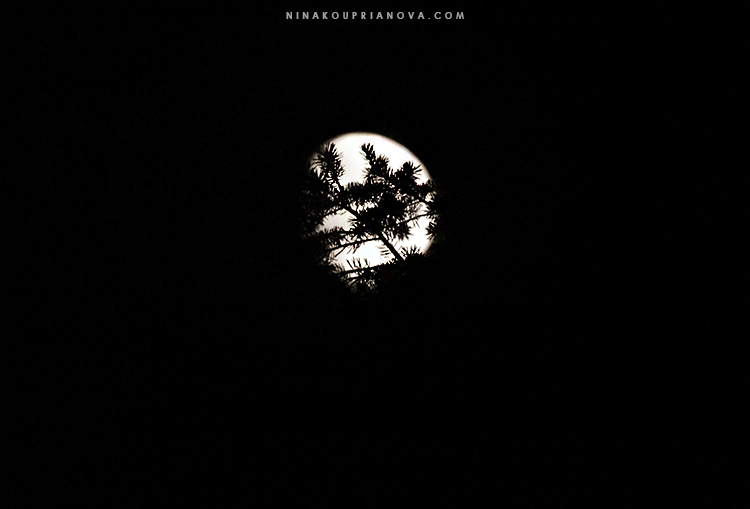 moon with branches cropped 750 px with url.jpg