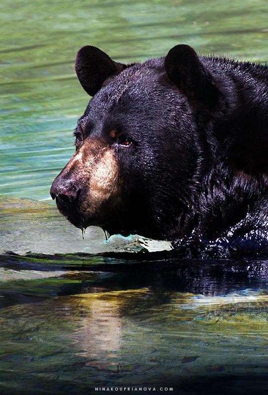 bear 4 800 px url.jpg