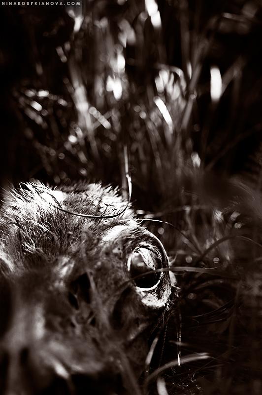 deer skull duo 800 px url.jpg