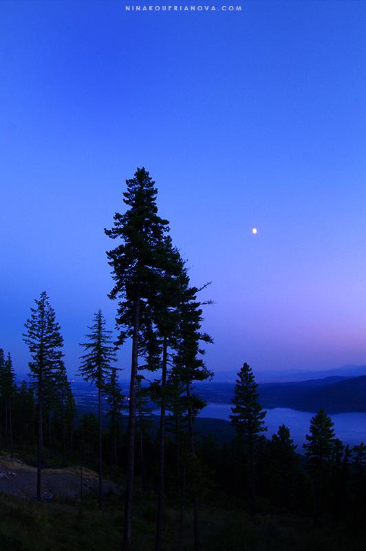 sunset august 15 trees 800 px url.jpg