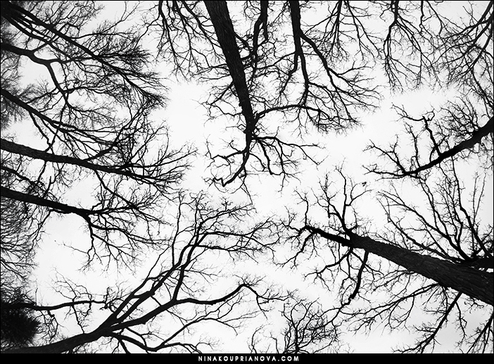 elm tree sky 700 px url.jpg