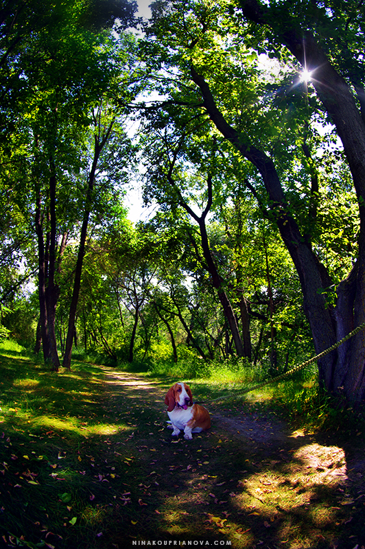 polly in the woods 800 px url.jpg