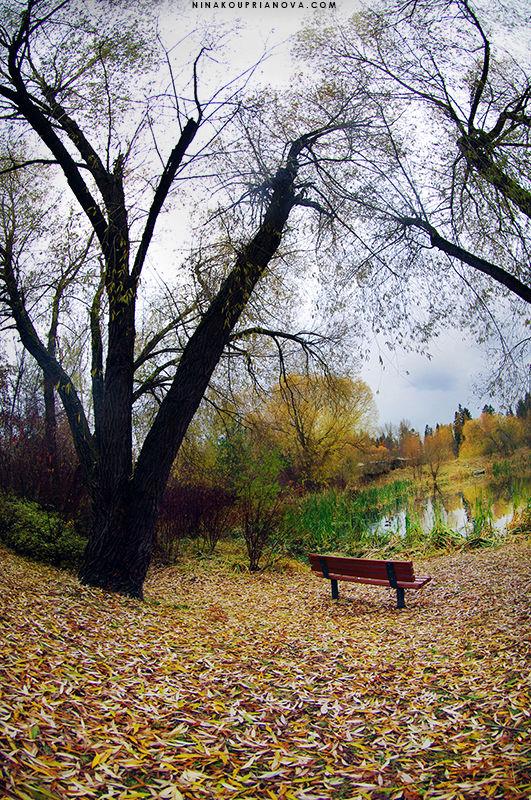 bench solitude 800 px url.jpg