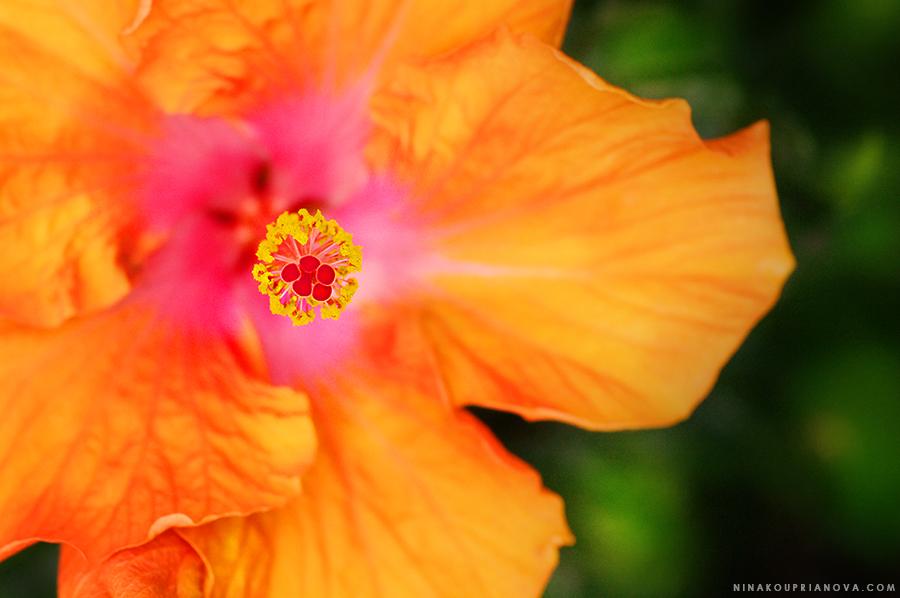 orange flower 900 px url.jpg