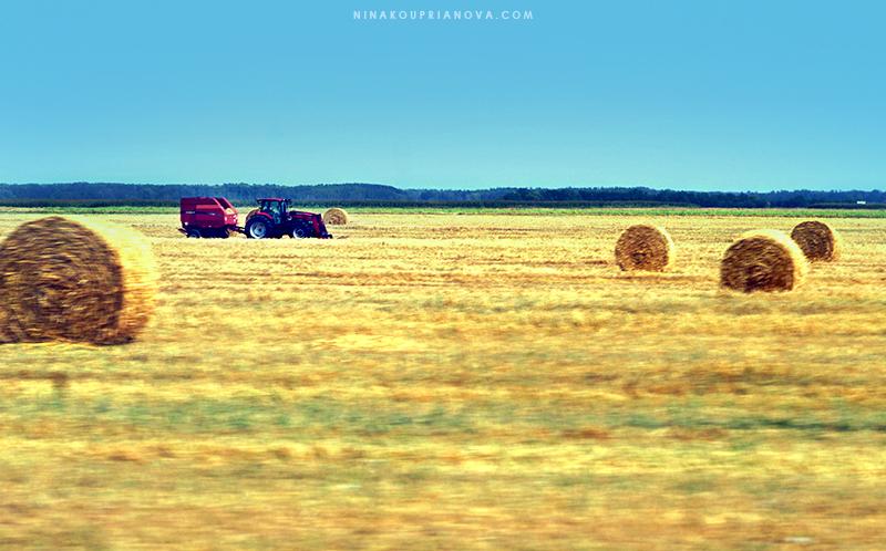 prairie 5 800 px url.jpg